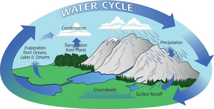 Image result for water cycle stages